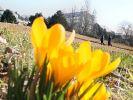 Endlich ist der Frühling da! (Foto)