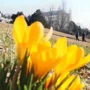Frühlingsanfang: Diese fünf Dinge sollten Sie jetzt tun (Foto)