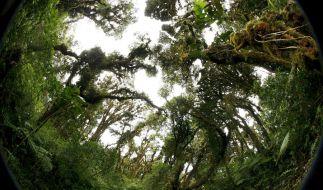 Ranghohe Nazis könnten im Dschungel ein Versteck gehabt haben. (Foto)