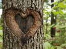 Emma McCabe liebt einen Baum und will ihn heiraten. (Foto)