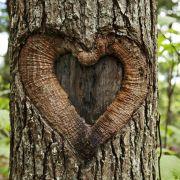Frau liebt einen Baum und will ihn heiraten (Foto)