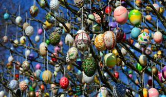 Geschmückt mit rund 10.000 liebevoll verzierten Eiern präsentiert sich der Saalfelder Ostereierbaum vom 21. März bis Ostermontag 2015. (Foto)