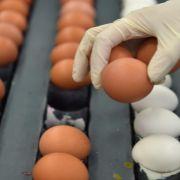 Eierkonsum in Deutschland steigt seit Jahren (Foto)