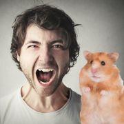 Student beißt lebendigem Hamster den Kopf ab (Foto)