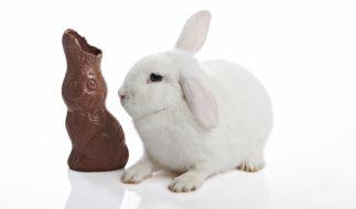 Schokohasen gibt es an Ostern in Hülle und Fülle - allerdings mit deutlichen Preis- und Qualitätsunterschieden. (Foto)