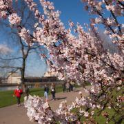 Endlich Frühling! Experte verspricht bis zu 20 Grad (Foto)