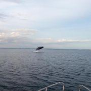 Buckelwale haben möglicherweise in der Ostsee überwintert (Foto)
