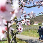 Gesundheit, Mode, Sport: Fünf wichtige Frühlingsinfos (Foto)