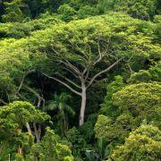 WWF: Neue Wasserkraftwerke bedrohen Amazonas-Gebiet (Foto)