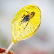 Essen wird ethischer mit Insekten und Fleisch aus dem Labor (Foto)