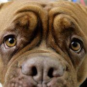 Hundchens Blick lässt Herrchens Herz höher schlagen (Foto)