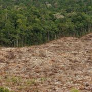 Immer mehr Morde an Umweltschützern (Foto)