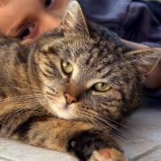 Frau erblindet nach Schmusen mit Katze (Foto)