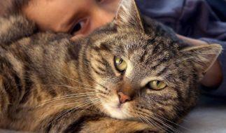 Vorsicht beim Knuddeln: Haustiere können Erreger übertragen. (Foto)