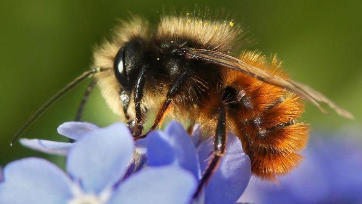 wissenschaft nikotin hnliche wirkung bienen fliegen auf insektizide. Black Bedroom Furniture Sets. Home Design Ideas