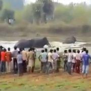 Männerhorde provoziert Elefanten - ein Toter (Foto)