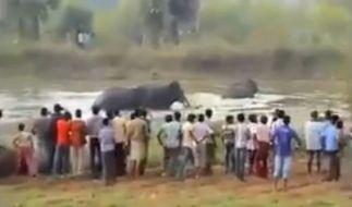 In Indien provozierten Männer einen Elefanten solange bis dieser ausrastete. (Foto)