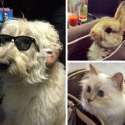 Wenn Haustiere selbst zu Promis werden (Foto)