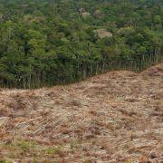 Studie: Immer mehr Wald verschwindet (Foto)