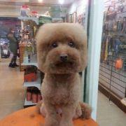 In Taiwan trägt Hund jetzt Quadratschädel (Foto)