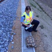 Riesenschildkröte Ronny blockiert Münchner S-Bahn (Foto)