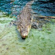 ARD-Moderator nimmt es mit einem Krokodil auf (Foto)