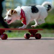 Schwanzwedelnd vorm Fernseher: Das ist Dog-TV (Foto)