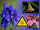 Gefahr für Pflanzenfreunde