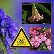 Diese Blumen sindGift im Garten (Foto)