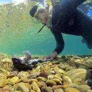 Umweltkrise am Titicaca: «Dem See droht der biologische Tod» (Foto)