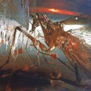 Räuberische Urzeit-Kakerlake entdeckt (Foto)