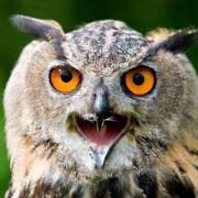 Artenschutz-Report: Jede dritte Art in Deutschland gefährdet (Foto)