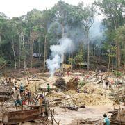 Club-of-Rome-Bericht warnt vor Untergang der Tropenwälder (Foto)