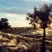 Invasion der Krabbeltiere: Spinnen-Regen in Australien (Foto)