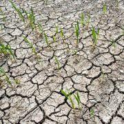 Trockene Äcker und Tigermücke: Klimawandel in Deutschland (Foto)