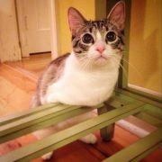 Katze Roux: Keine Beine, aber viele Fans (Foto)