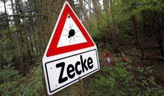Im Wald lauert die Gefahr: Es ist Zeckensaison. (Foto)