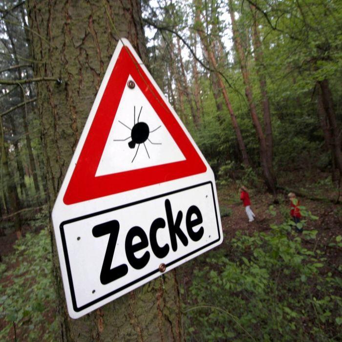 In diesen Gebieten wird der Zeckenbiss zur Gefahr (Foto)