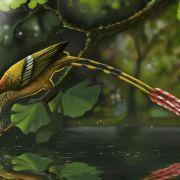 Seltener Südamerika-Fund: fossiler Vogelzwerg mit Band-Federn (Foto)