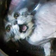 Katze wurde in eine Waschmaschine gesteckt.