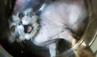 Eine Katze wurde zur Strafe in eine Waschmaschine gesteckt. (Foto)