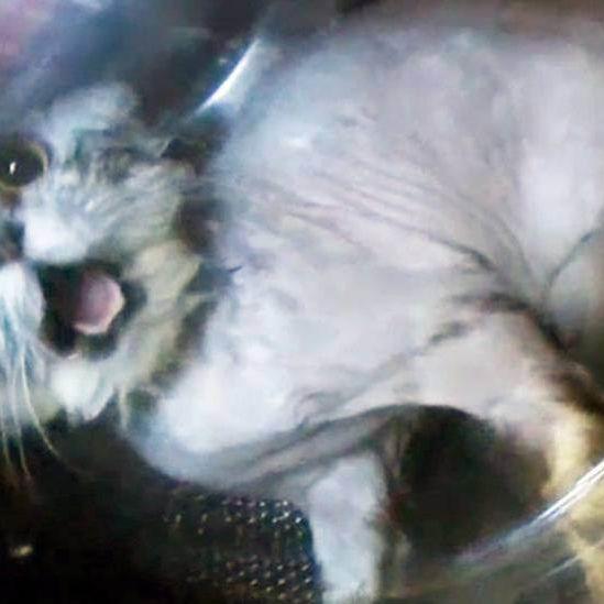 Katze von Teenies in Waschmaschine gesperrt (Foto)