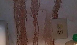 Seltsame Flecken tauchten an der Wand von Thomas Kennedy auf. (Foto)