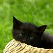 Kätzchen überlebt Fahrt durch Recyclinganlage (Foto)