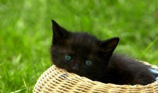 So entspannt wie dieses Kätzchen hätte Stig aus England sicherlich auch gerne in der Sonne gelegen. (Foto)