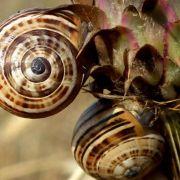 Anderer Kontinent: Arten gleichen sich an (Foto)