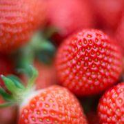 Noroviren! Aldi ruft Tiefkühl-Erdbeeren zurück (Foto)