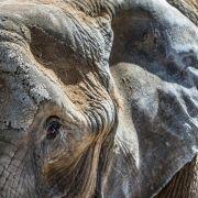 Zirkuselefant tötet Spaziergänger in Baden-Württemberg (Foto)