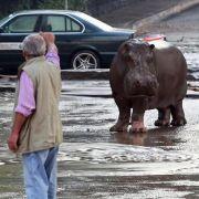 Tote bei Unwetter in Tiflis - wilde Tiere aus Zoo entlaufen (Foto)