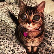 Spooky! Diese Katze sieht aus wie ein Alien (Foto)